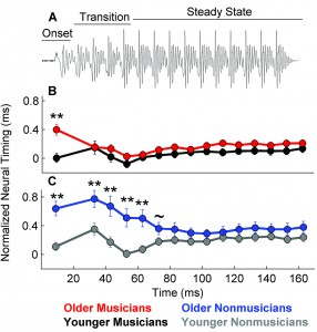 Figure 3a-c. Musicianship offsets delayed neural timing in older adults. 3A: Stimulus waveform marked with three time regions: onset, transition, and steady state. 3B: Older musicians have delayed onsets, but there are no delays for the transition or steady state relative to younger musicians. 3C: Older nonmusicians have delayed peak latencies for both the onset and the transition regions, but not the steady state. ~p < 0.10, *p < 0.05, **p < 0.01. Adapted from Parbery-Clark et al.