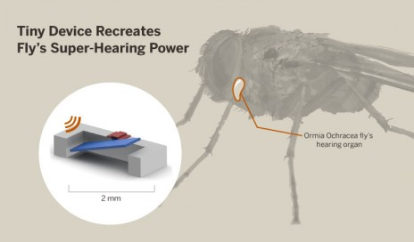 fly-hearing-device